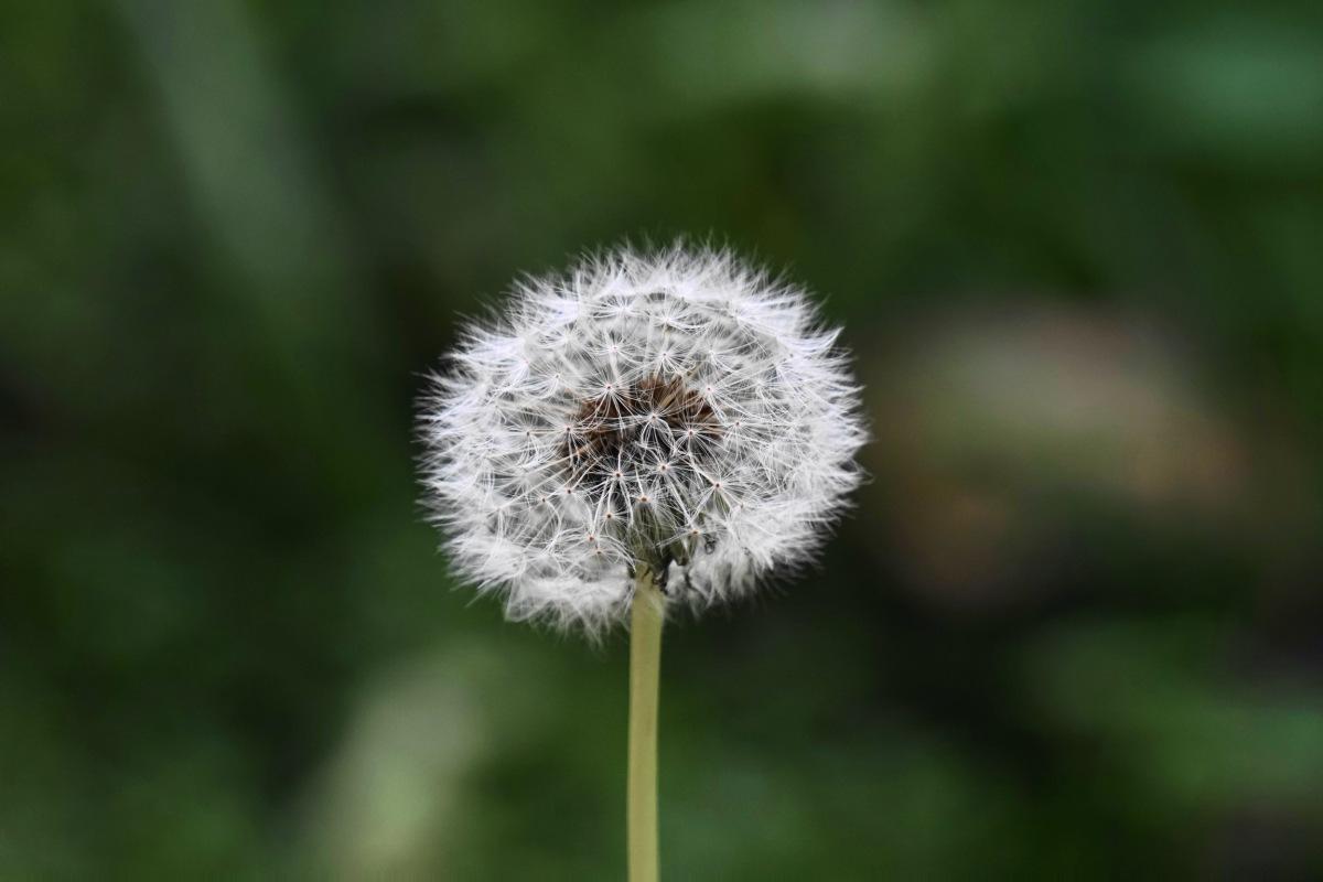 Wishing and wondering